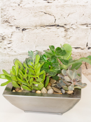Product_ModernSucculents_IMG_1923