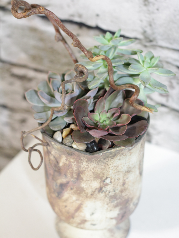 Product_IndustrialSucculents_IMG-9906