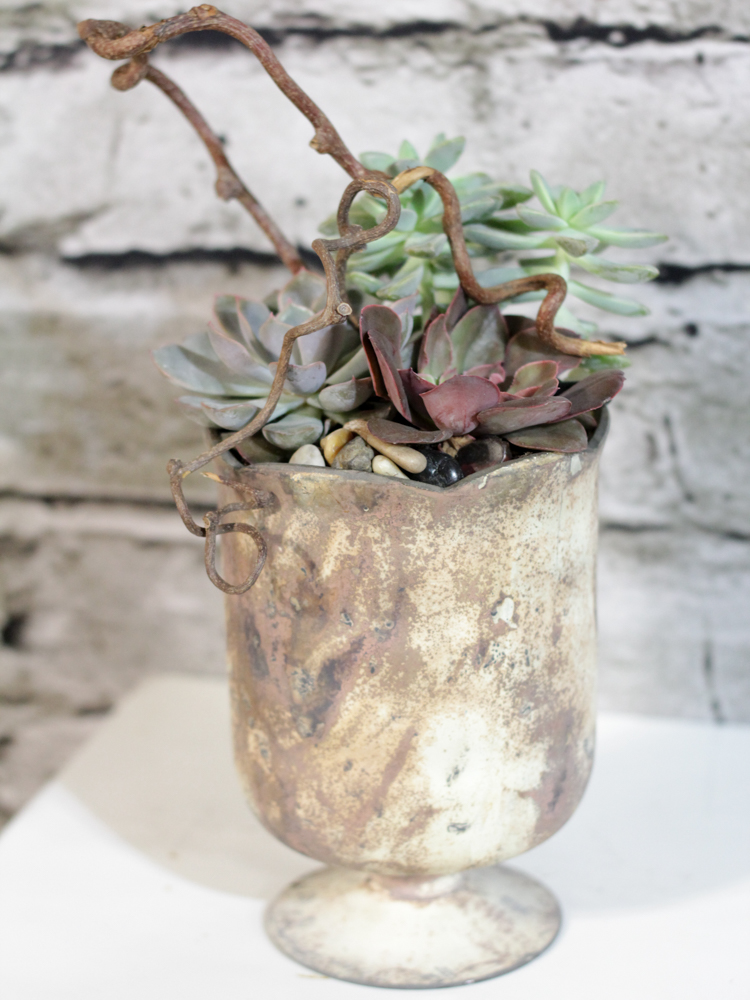 Product_IndustrialSucculents_IMG-9912
