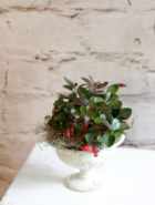 Product_WinterBerry_IMG-0314