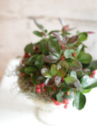 Product_WinterBerry_IMG-0316