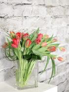 Product_Tulip Waterfall_IMG-8683